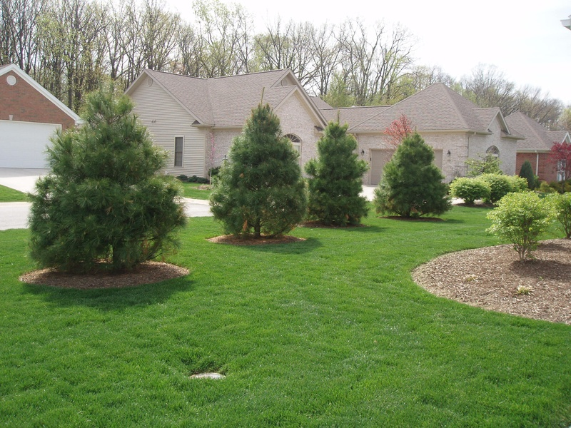 E white pine cornerstone landscape and design - Landscaping with trees ideas ...