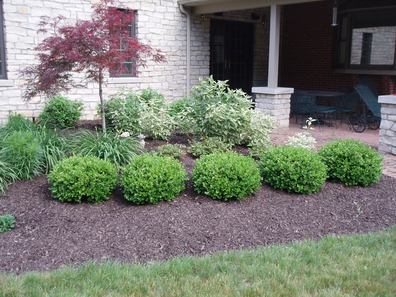 Landscaping With Shrubs : Boxwood hedge cornerstone landscape and design